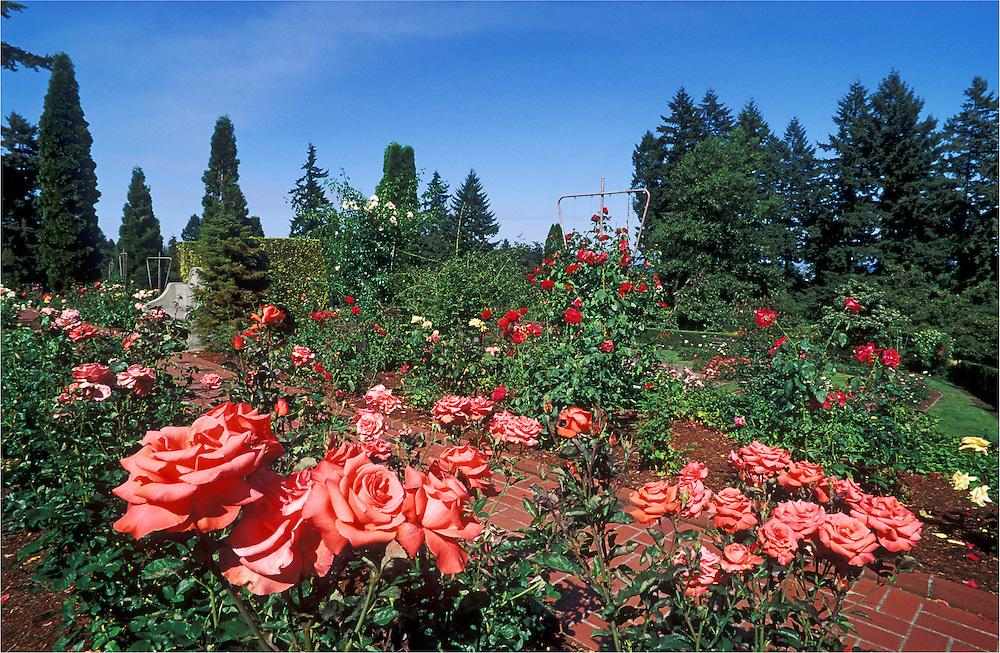 Washington Park Rose Garden, Portland, Oregon.