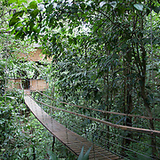 Wooden bridge linking their bedroom to the living room on one of the main treehouses of Finca Bellavista