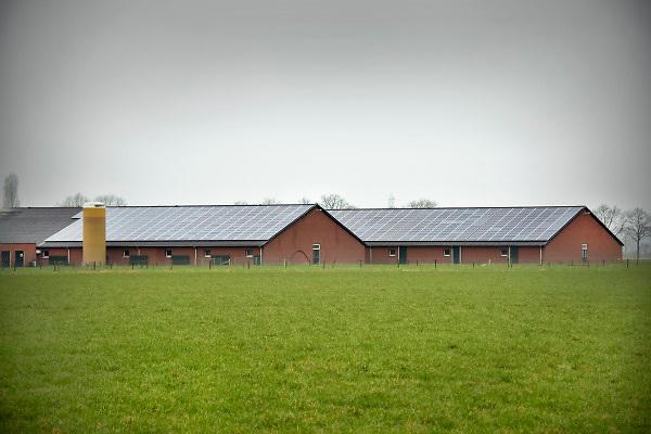 Nederland, Boekel, 10-2-2018Megastallen en varkens in het buitengebied in Noord-Brabant .Foto: Flip Franssen