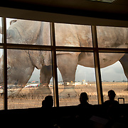 Kenya. Nairobi airport.  Image of a rhinoceros printed on windows overlooking the airfield