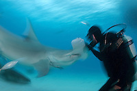 Mike Black gets acquainted with a Hammerhead<br /> <br /> Shot in Bimini, Bahamas