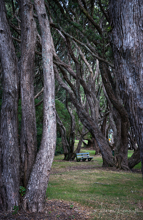 Scenes from the countryside and downtown areas of New Plymouth in the Taranaki Region of New Zealand
