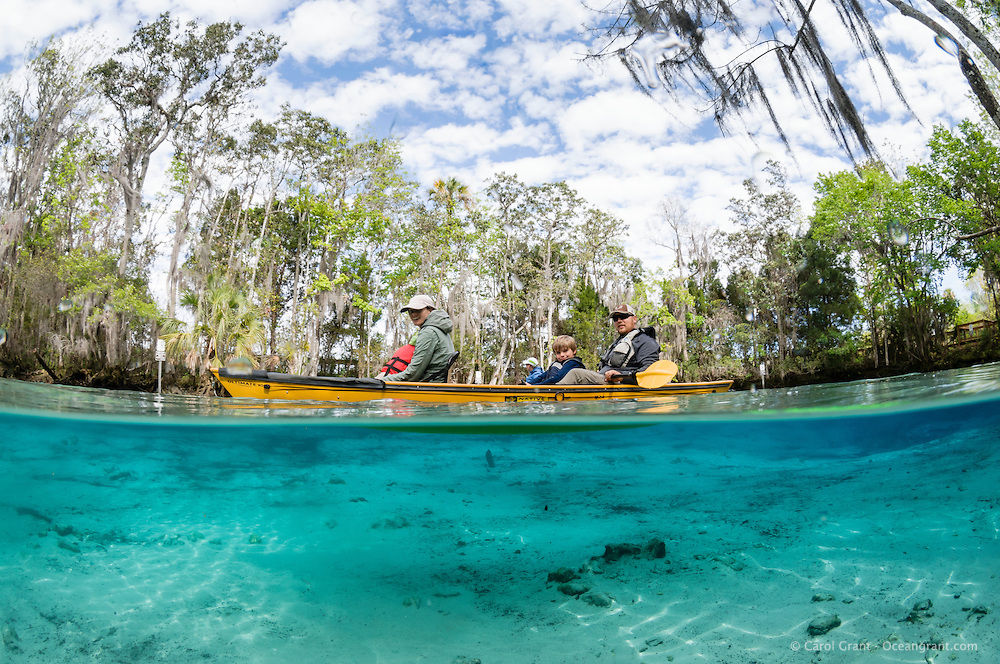 A family with children in a kayak explore the natural freshwater springs on a cool winter day. Horizontal orientation split image with blue spring water mixing with aqua. Three Sisters Springs, Crystal River National Wildlife Refuge, Kings Bay, Crystal River, Citrus County, Florida USA.