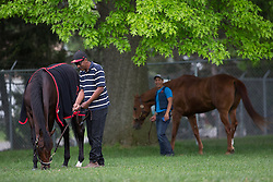 Kentucky Derby 139 entrant Orb, left,  grazed in a paddock with Julio Gondule after workouts Friday, May 03, 2013 at Churchill Downs in Louisville. Photo by Jonathan Palmer