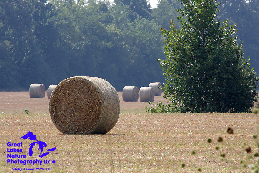 Round hay bales sit in a Northeast Wisconsin field on a hot, hazy day in August. Round bales make for a fascinating photographic subject, as they appear to be in motion!