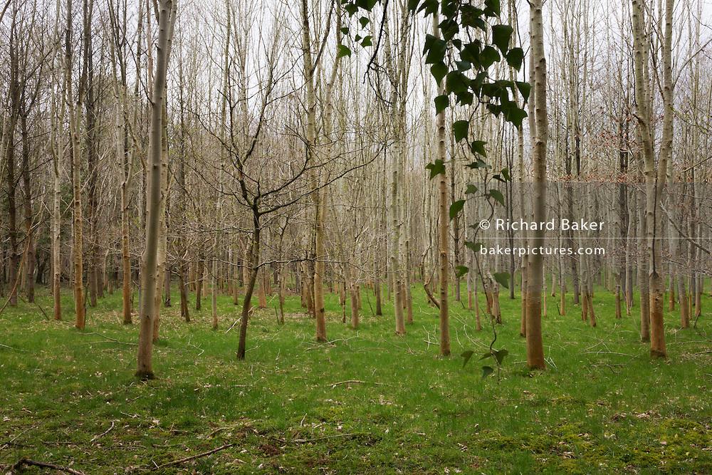 Generic woodland plantation landscape.