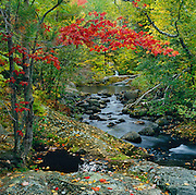 The soft light of an overcast day bring a gentle touch of fall to the Howe Brook region of Baxter State Park, Maine, USA
