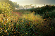 Perennial border, grasses, persicaria, seedheads, mist