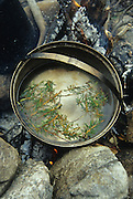 Labrador tea steeping on an open fire, Yukon