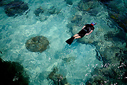 "Cairns, Queensland, AUS, 20070919: A tourist snorkelling in the water outside Green Island.<br /> The corals at the Great Barrier Reef are dying at an alarming rate due to the temperature rise in the ocean. The corals have previously been able to rebounce during the cold season from the process called ""bleaching"", but now the cold seasons are too short for the corals to survive."