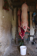 Pig hanging after slaughter, that usually happes in the cold Winter months.