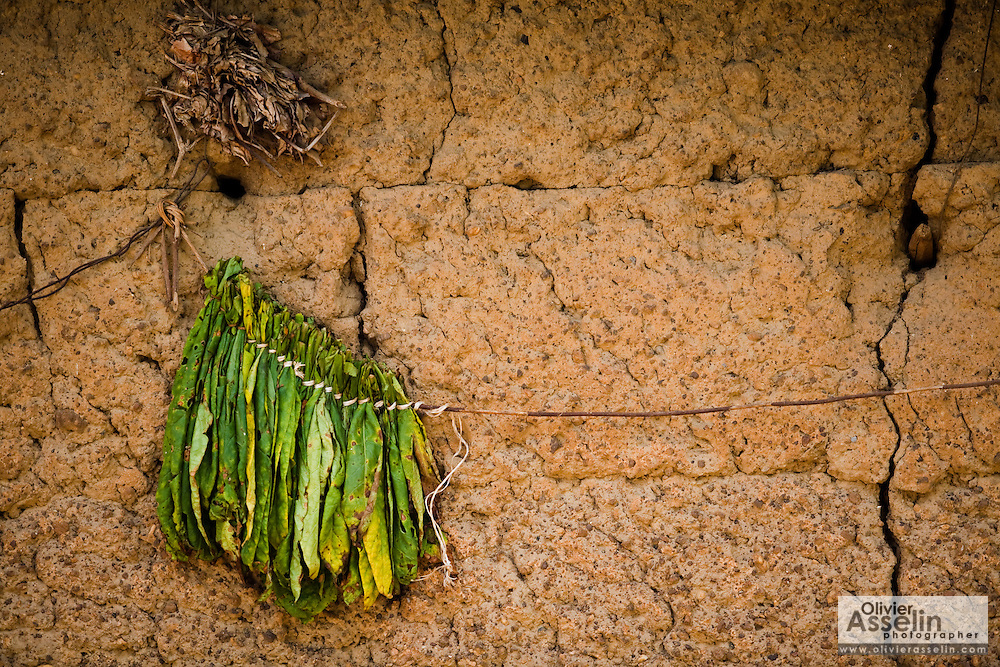 Leaves drying outside a home in Tano Akakro, Cote d'Ivoire on Saturday June 20, 2009.