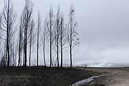 Stormy clouds gathering over some burned trees.