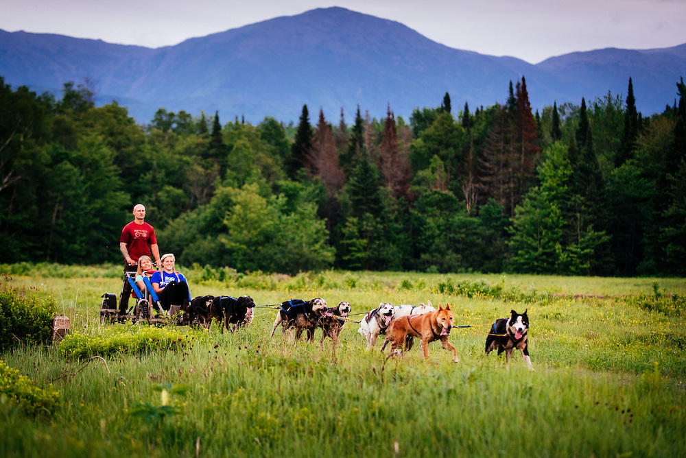 Summer dog sledding in White Mountains of New Hampshire