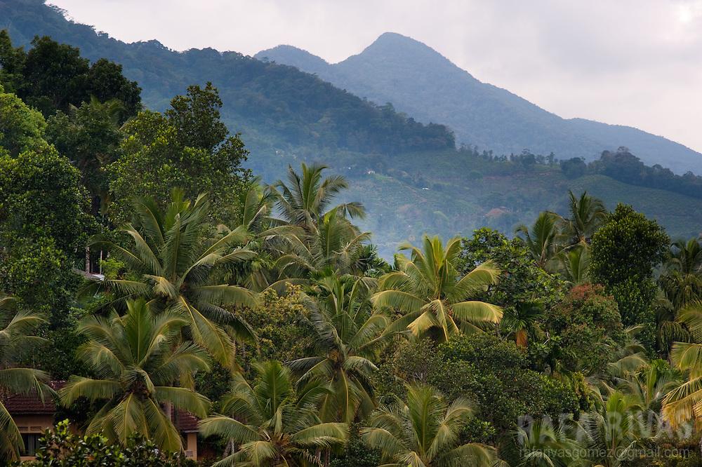 View of a jungle area close to Rakwana, Sri Lanka, on February 28, 2011. Photo Rafa Rivas