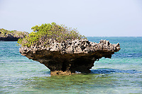 coral reef rock out of the water in the beautiful chale island near mombassa kenya