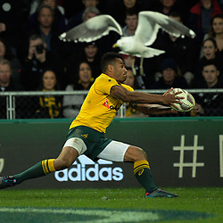 Will Genia takes loose ball as a seagull gets out of the way during the Rugby Championship and Bledisloe Cup rugby match between the New Zealand All Blacks and Australia Wallabies at Forsyth Barr Stadium in Dunedin, New Zealand on Saturday, 26 August 2017. Photo: Dave Lintott / lintottphoto.co.nz