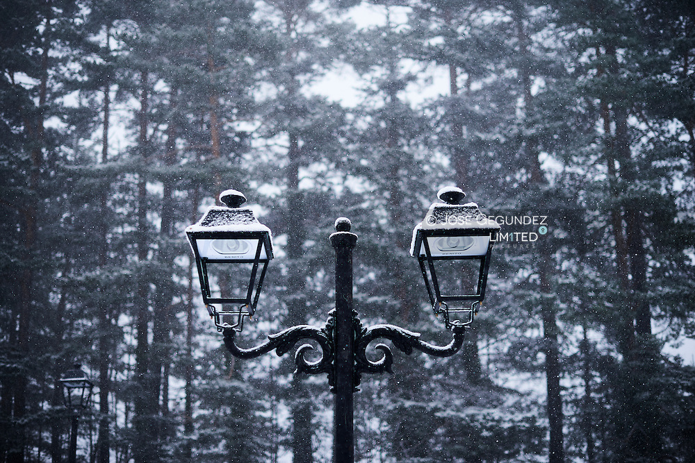 Two snowy streetlight at forest