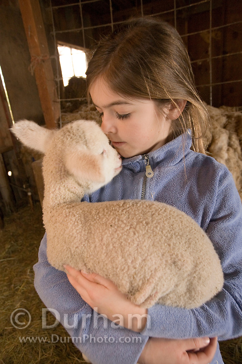 10 year old Hannah holds a three day old lamb in a barn on a Sauvie Island farm. Oregon. model/property released.