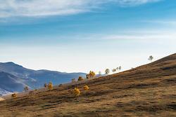 July 6, 2018 - Inner Mongolia, Inner Mongolia, China - Inner Mongolia, CHINA-Autumn scenery of grassland at Saihanba in north China's Inner Mongolia. (Credit Image: © SIPA Asia via ZUMA Wire)