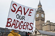 26 Jan 2017 - London march and vigil against the badger cull.