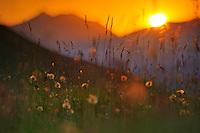 Wildflowers, Pollino National Park, Italy; WWoE Mission