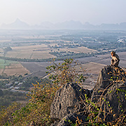 A Long Tailed macaque, Macaca fascicularis, looks out over the surrounding country and hills from  Wat Tham Talu, Ratchaburi, Thailand.