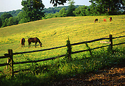 Horse Pasture, Rural Chester Co., PA