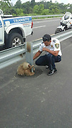 Cop Saves Tiny Terrified Sloth Stuck On A Highway<br /> <br /> One does not simply cross the road, especially if one is a… sloth.<br /> The unexpected passerby went on an adventure in Quevedo, central Ecuador. But the sloth's engine ran out in the middle of the road. That's when the local police went on the most adorable rescue mission and commemorated it by posting pictures on their Facebook page. The little traveller had gained many fans who were glad to know that the story ended well.<br /> But the most important question still remains: why did the sloth cross the road..?<br /> ©Exclusivepix Media