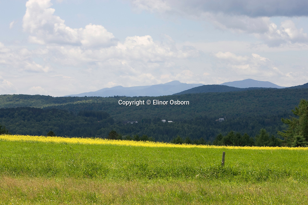 Mt. Mansfield from Strong Farm, kale