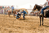 Wilsall Ranch Rodeo, Calf Branding Competition, Ed Fryer, Bev Fryer, David Fryer, Andy Kellom, North Fork Raiders team, Montana, MODEL RELEASED, PROPERTY RELEASED on four contestants & horses only