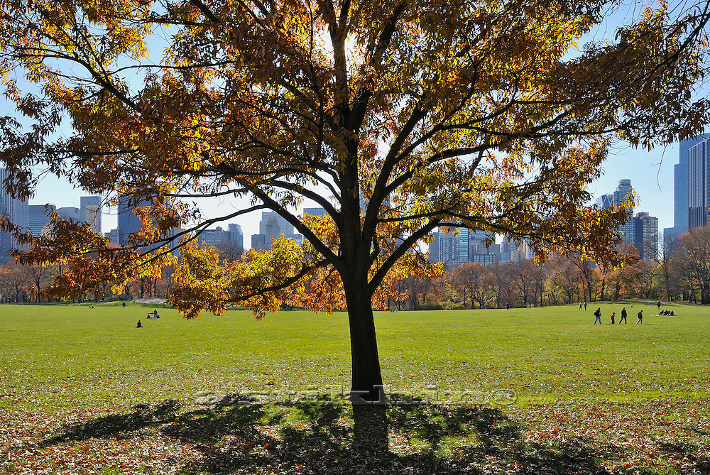 Fall on Sheep Meadow of Central Park