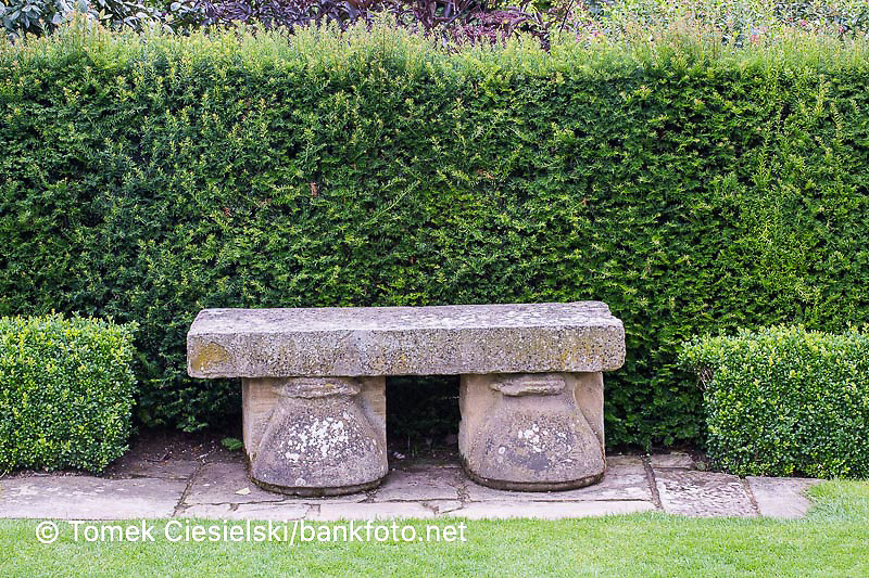 Stone bench in front of taxus hedge