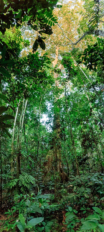 Rainforest around Chalalan lake, Madidi National Park, Bolivia