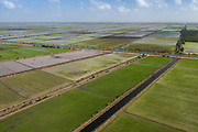 Rice production<br /> Coastal area<br /> Miconi Mahaica<br /> GUYANA<br /> South America