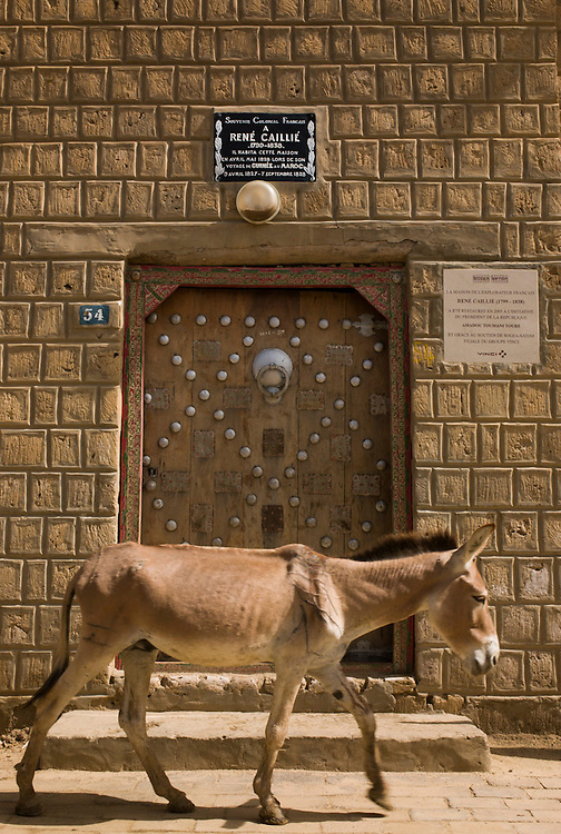 Donkey passes in front of the house were French explorer Ren�ailli�tayed in Timbuktu, Mali.