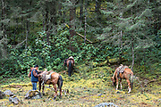 Local forest guardian guides rest their horses after the two hour journey up the mountain to the Cerro Pelon Monarch Butterfly Preserve near Macheros, Michoacan, Mexico. The monarch butterfly migration is a phenomenon across North America, where the butterflies migrates each autumn to overwintering sites in Central Mexico.