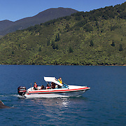 Dolphins in playful mood in front of a pleasure boat with children in Queen Charlotte Sound, South Island, New Zealand..The dolphins are viewed by tourists on a 'swimming with Dolphins' trip with Dolphin Watch Eco Tours, run out of Picton, South Island, New Zealand. 27th January 2011. Photo Tim Clayton...