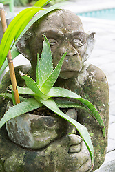 monkey planter with an aloe plant