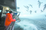 Fisherman John Macgregor, aboard the boat he part-owns named My Amber, fishing for prawns off Scotland's west coast in a marine 'box' in the inner sound of Rona which restricts entry to large trawlers looking for white fish and allows around 16 creelers unrestricted fishing..