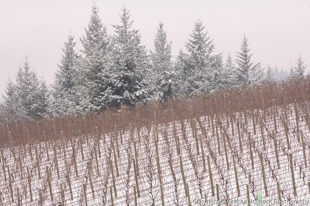 Snow at Bergstrom Winery, Yamhill-Carlton AVA, Willamette Valley, Oregon