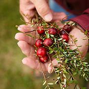 20151013 Cranberry Farm Tomah WI