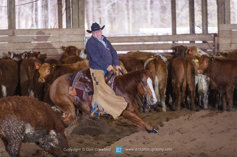 April 29 2017 - Minshall Farm Cutting 1, held at Minshall Farms, Hillsburgh Ontario. The event was put on by the Ontario Cutting Horse Association. Riding in the Non-Pro Class is John Koop on Head Cat owned by the rider.