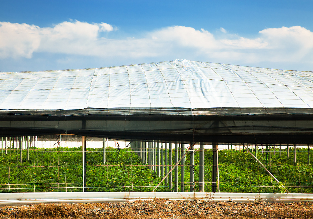 A plastic greenhouse (invernadero) located in the province of Almeria, Spain. These plastic greenhouses blanket the land with plants being grown all year round for intensive vegetable production.