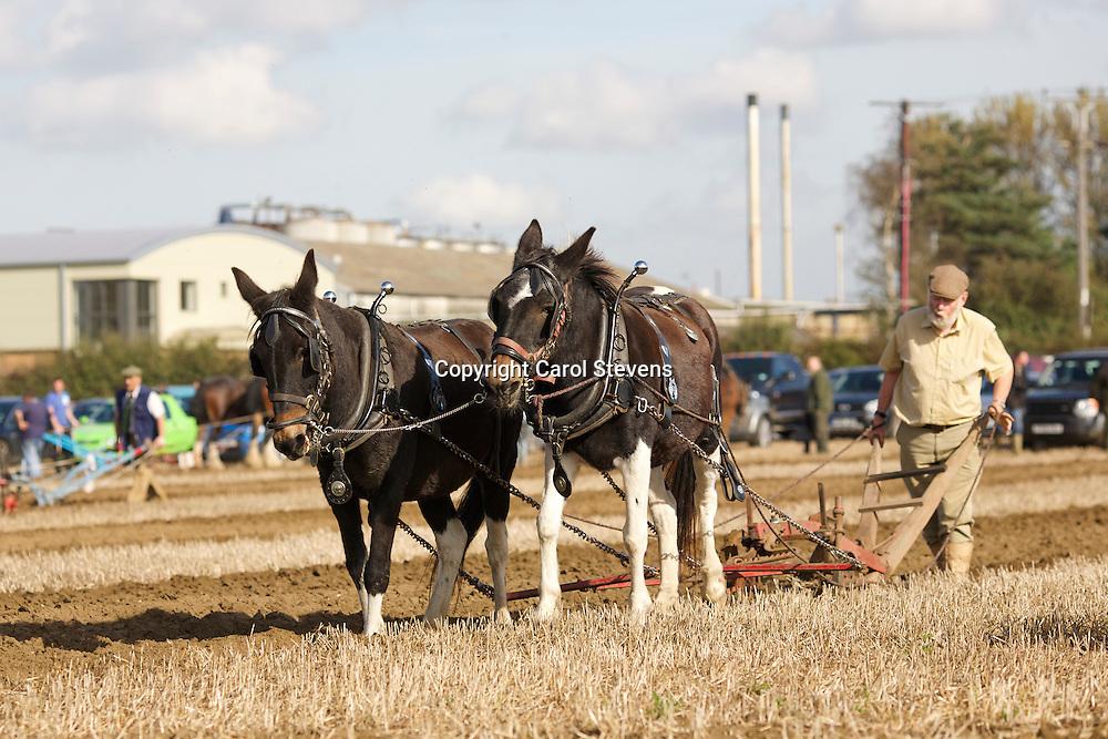 G Vernon's Mules, Queenie and Reuben<br /> 7th  General Purpose