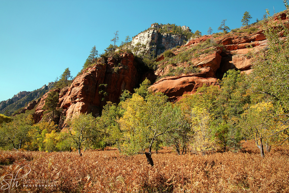 The colors of fall, rising from a field along the West Fork Trail - Oak Creek Canyon, AZ