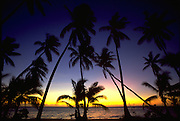 Palm Trees, Sunset, Hawaii, USA<br />