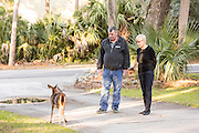 HSUS Immunocontraception Program Manager Rick Naugle and Linda Freeman view deer roaming freely on Fripp Island, SC.