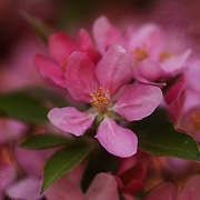 &quot;Blossoms and Brocade&quot; <br />