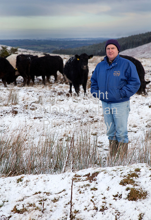 19/1/2009.Joe Condon of Omega Organic Beef pictured with his Galloway herd on his farm in Ballymacarbry County Tipperary..Picture Dylan Vaughan